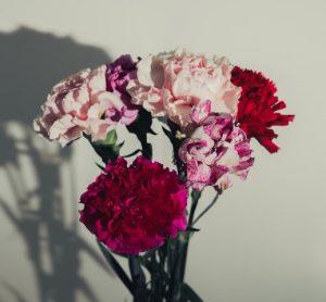 ดอกคาร์เนชัน หนึ่งในดอกไม้ที่นิยมนำมาประดับพวงหรีด