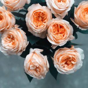 ดอกกุหลาบ หนึ่งในดอกไม้ที่นิยมนำมาประดับพวงหรีด